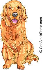dorado, bosquejo, casta, arma de fuego, perro, vector, rojo, perro cobrador