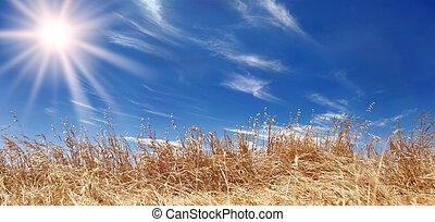 dorado, campo de trigo, panorama, con, un, hermoso, cielo