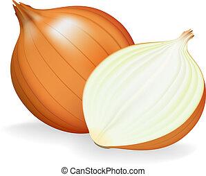 dorado, cebolla, entero, y, half., vector, illustration.