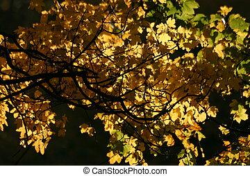 dorado, hojas