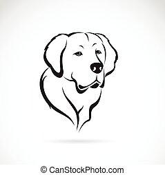 dorado, imagen, vector, plano de fondo, blanco, perro cobrador