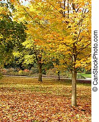 dorado, otoño, árbol