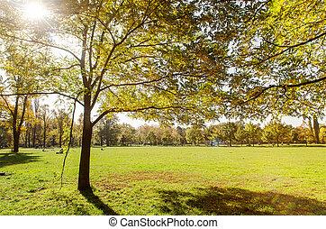 dorado, otoño, en, un, parque