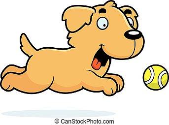 dorado, pelota, perseguir, caricatura, perro cobrador