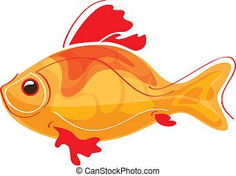 dorado, pez