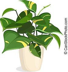 dorado, planta, pothos