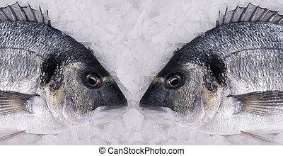 dorado, visje, het liggen, ijs, twee