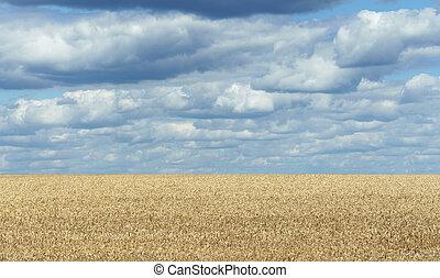dorato, frumento, cielo, nuvoloso, campo, orizzonte