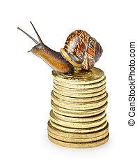 dorato, monete, lumaca