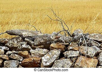dorato, pietra, estate, parete, campo, muratura