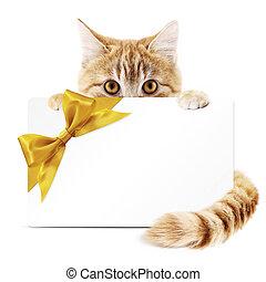 dorato, regalo, isolato, gatto, nastro, fondo, bianco, arco, scheda