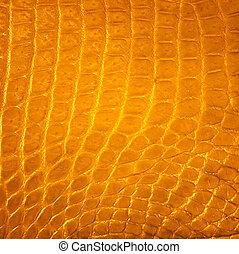 dorato, struttura, coccodrillo, fondo, pelle, acqua dolce