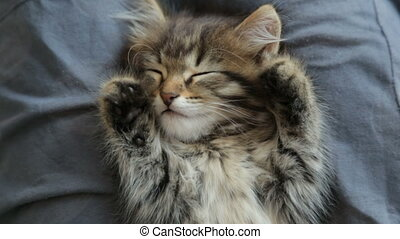dormir, chaton, femme, recouvrement