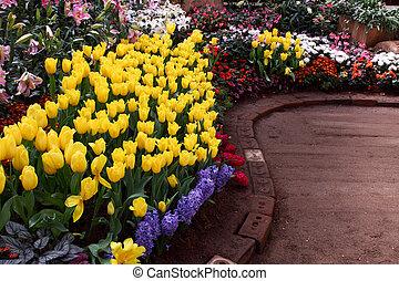 dorosły, exquisite., do góry, parki, tulipany