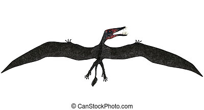 Dorygnathus Flight on White - Dorygnathus was a pterosaur...