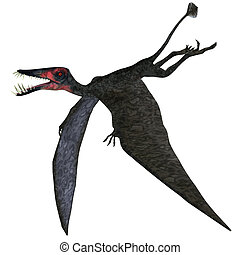 Dorygnathus Pterosaur on White