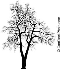 dos, árboles, acacia