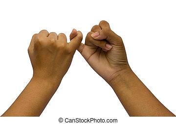 dos, acoplado, manos, aislado, blanco, plano de fondo