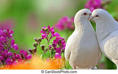 dos, amoroso, blanco, palomas, y, hermoso, flores púrpuras