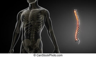dos, anatomie, balayage, monde médical