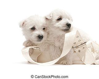dos, blanco, perritos, descansar, en, el, bolsa