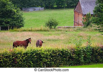 dos, caballos, en, el, pasto