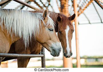 dos, caballos, en, un, granja