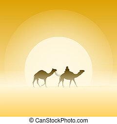 dos, camellos, y, sol