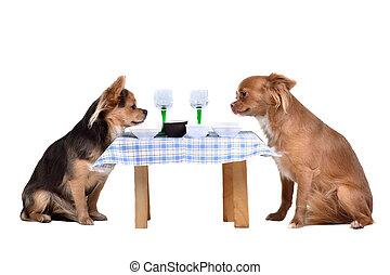 dos, chihuahua, perros, en la mesa
