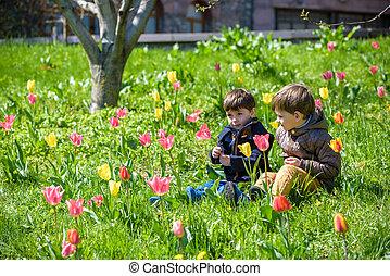 dos, hermanos, sentado, en, un, campo, de, tulips.