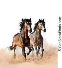 dos, hermoso, caballos, corriente