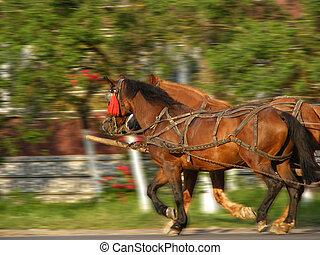 dos, hermoso, caballos, harnessed, a, un, carrito, seguir adelante, el, calle