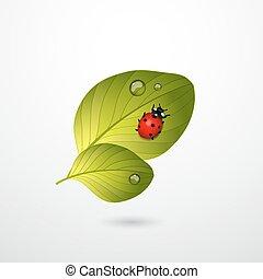 dos, hojas verdes, con, rojo, dama, bug.