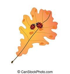 dos, lindo, mariquitas, en, otoño, hoja del roble