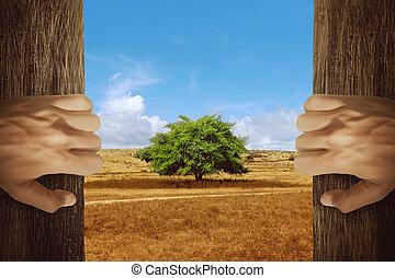 dos manos, apertura, puerta de madera, con, árbol, en, el, cambiar, ambiente