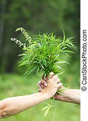 dos manos, tenencia, cannabis
