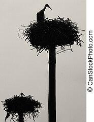 dos, niveles, cigüeña, nido