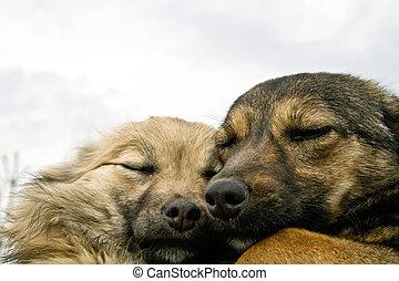 dos, perros, warming, uno al otro