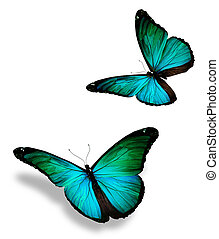dos, turquesa, mariposa, aislado, blanco