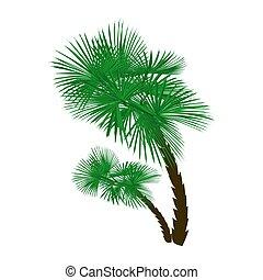 dos, verde, árboles de palma, en, un, ángulo, aislado, blanco, fondo., ilustración