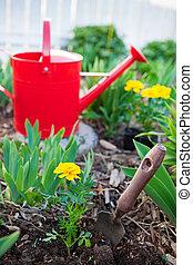 dosadzenie, jednoroczne rośliny