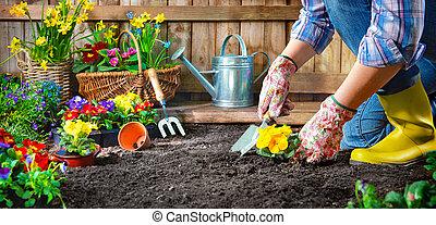 dosadzenie, kwiaty, w, słoneczny, ogród