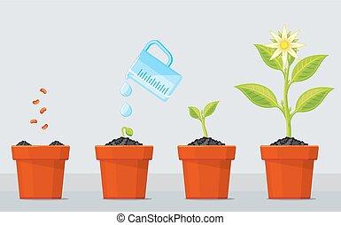 dosadzenie, roślina, proces, timeline, drzewo, infographic, rozwój, stages.