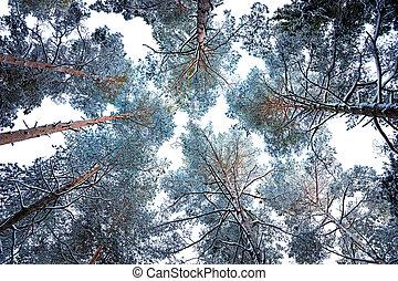 dosel árbol, en, invierno