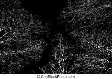 dosel de bosque, como, vistos, de, debajo, en, invierno