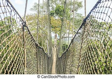 dosel, senderos, en, tropical, rainforest, kakum, parque...