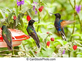 dosificador de agua, colibrís, azúcar