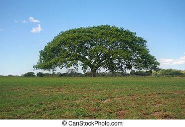 doskonały, krajobraz., non-miejski, drzewo, sylwetka na tle...