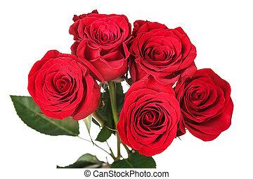 doskonały, róża, nasycony, czerwony