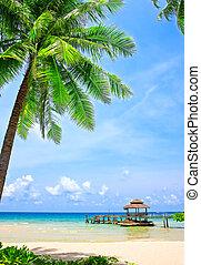 doskonały, tropikalny, dłoń plaża, drzewo